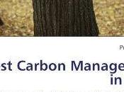 Forest Carbon Management India: Framework Policies Trade Strategies FREE Promode Kant