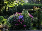 jardin d'Oscar...