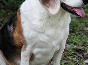 astuces pour faire maigrir chien