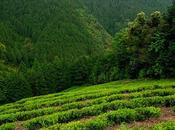 Kama-iri montagnes Tosa