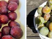 méthodes conservation prunes