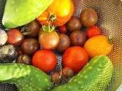 belle récolte tomates jardin