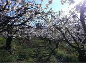 Coucou suis retour Nouvel article découvrir blog Www.lacouturedemam.com #nature #photo #photos #photodujour #ardèche @Saint-Péray