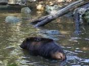après-midi Zoo… Flèche