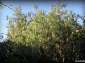 jardin Tiziana