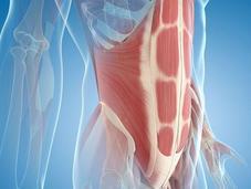 MUSCLES ABDOMINAUX: Pourquoi devez-vous renforcer? Santé Orthopédique