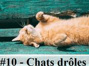 photos chats drôles