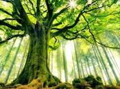 beauté arbres