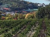 Abrau-Durso Festival vins fausse vente domaine Roberto Voerzio