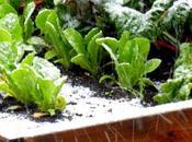Potager d'hiver légumes productifs même hiver