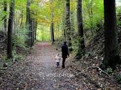 jolie promenade forêt