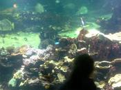L'Aquarium Nausicaa famille