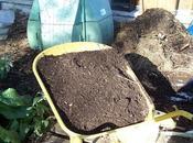 L'importance compost mulch pour belles récoltes