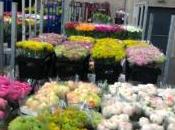fleurs d'hiver SICA Hyères