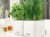 Pimentez votre semaine, avec herbes aromatiques* portée main