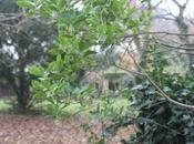 Arbutus unedo redécouvre soleil