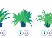 plantes dépolluantes pour