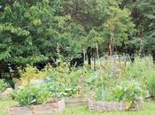 Grâce Tipeee, aidez-moi propager virus jardinage