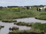 Calendrier l'Avent: jour l'eau chevaux