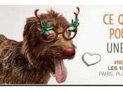 Noël animaux décembre, allez adopter