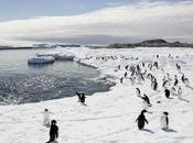 Non, manchots sont morts Antarctique cause d'un iceberg