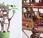 Somewhere small cabanes miniature perchées plantes d'intérieur