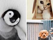 Case N°21 Quand serai grande, vétérinaire petits animaux