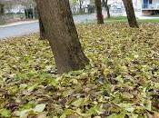 feuilles mortes: d'automne hiver retard! troncs photos Senaq