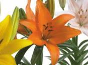 Langages fleurs: