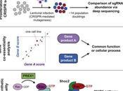 #cell #leucémiemyéloïdeaigue #testdessentialité #réseauxdegènes #oncogèneRas test d'essentialité* pour détermination profil génétique révèlent réseaux gènes interactions avec l'oncogène