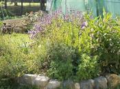 Accueillez plantes médicinales dans votre jardin pour améliorer santé