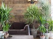 autre plante disparue boutiques Yucca