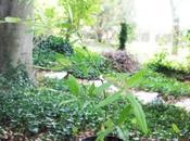 Zanthoxylum subtrifoliatum