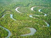 forêt tropical située afrique, asie, amérique centrale, dans certaines parties l'océanie.
