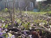 Photos violettes font-elles printemps