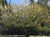 Point cerisier vert remplace blanc