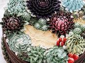Succulent gâteaux Ivenoven