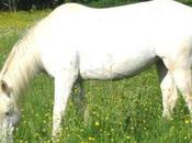 fête cheval