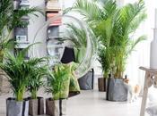 Vous avez plantes vertes chez vous: vous vivrez plus longtemps