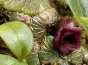 nouvelles plantes découvertes dans monde 2016
