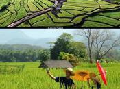 Amazing Thai Rice Route, tout vous devez savoir