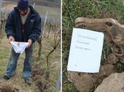test slip, curieuse expérience agronomique