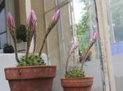 beau cactus