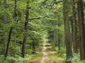 Région Grand signe contrat filière forêt-bois France