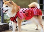 Armures Samouraï pour Animaux
