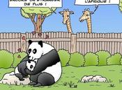 est, petit panda