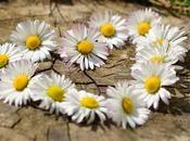 Découvre fleur dans coeur