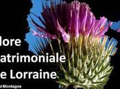 Flore habitats patrimoniaux Lorraine
