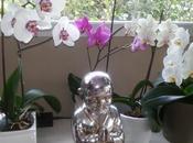 Conseils pour orchidées fleurissent longtemps