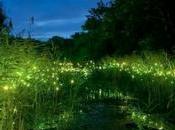 soir lucioles